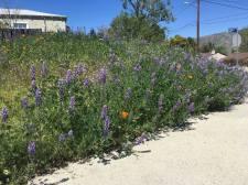 The Wildflower Annex