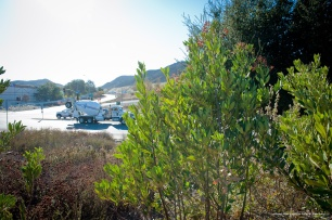Toyon, Lemonade Berry and Bush Mallow separate the freeway from residences.