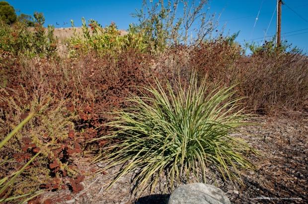 FormLA_Yucca_Buckwheat-CA_SWNG_LHP-192WEB